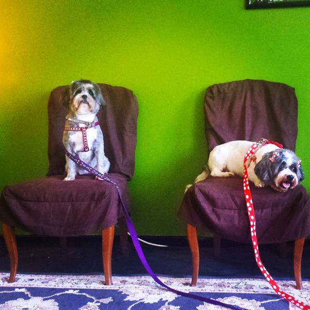Our waiting room was designed for dogs