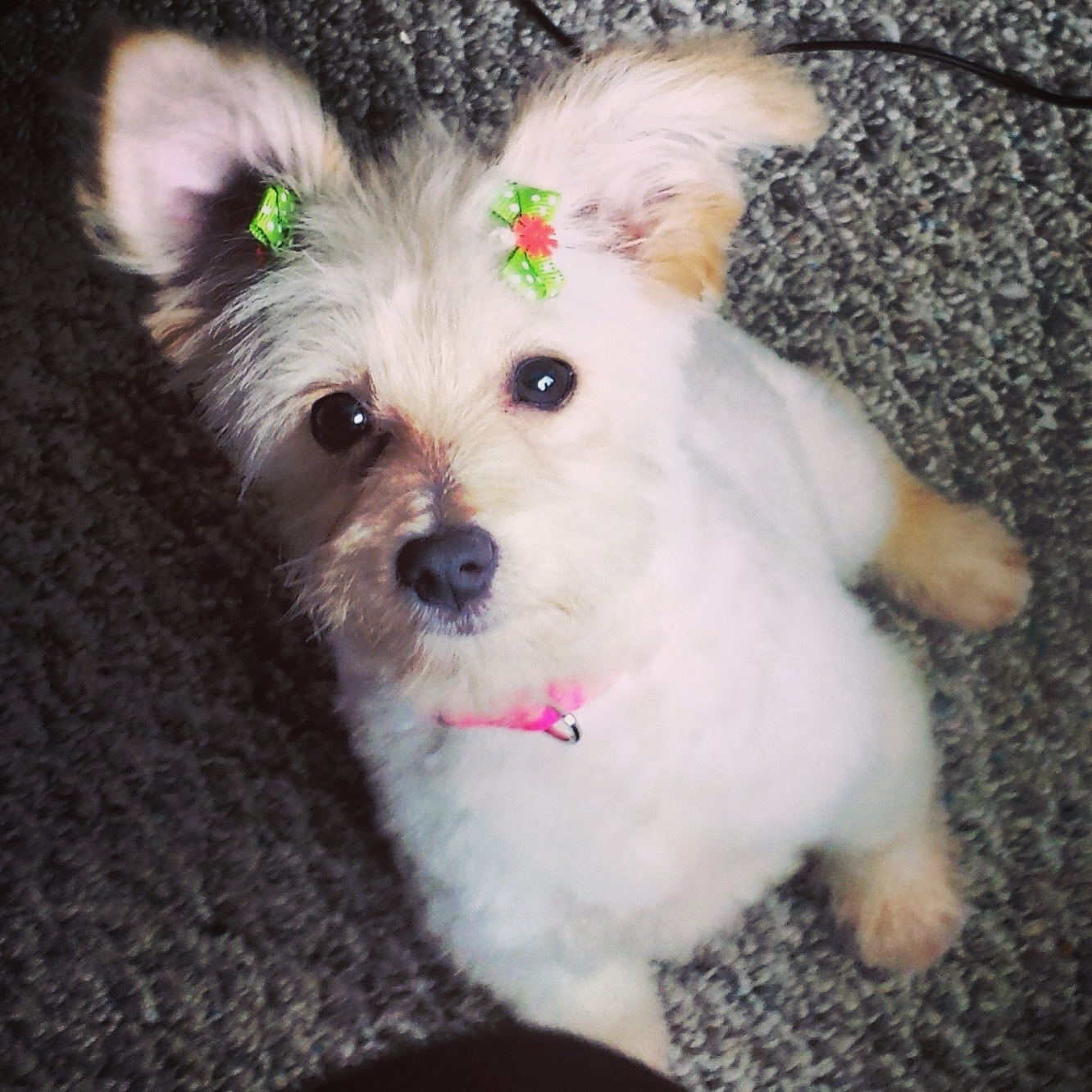 Puppy's First Groom